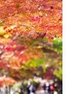 아름다운가을 풍경33