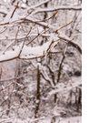 눈 내린 날의 풍경 20