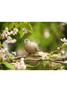 비둘기 작은 새