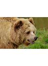 야생동물 아기 곰돌이