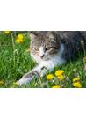 새끼고양이(cats kitten) 사진 이미지