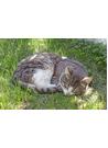 나른한 오후 낮잠 자는 들고양이 이미지