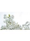 정원에 핀 하얀 봄꽃