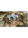 둥지 지키는 앵무새