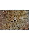 통나무 고목나무 단면 사진