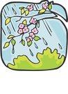 비,나무,꽃나무,벗꽃,살구꽃