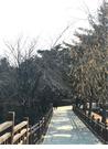 서울숲 가을 풍경사진 - 자연풍경